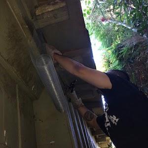 Los Angeles Raccoon Damage Repair