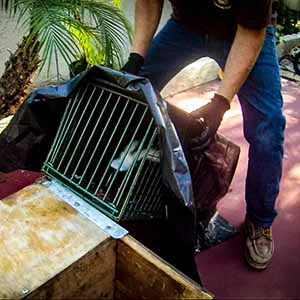 Los Angeles Skunk Trapping & Removal