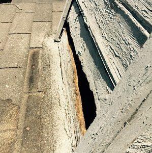 Raccoon Damage in Los Angeles