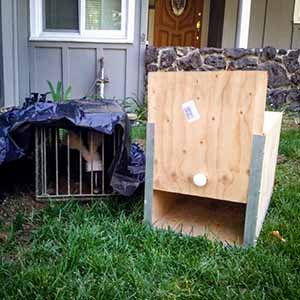 Skunk Trapping & Removal
