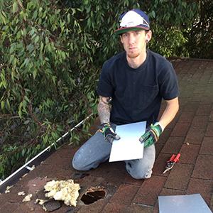 raccoon roof damage repair los angeles